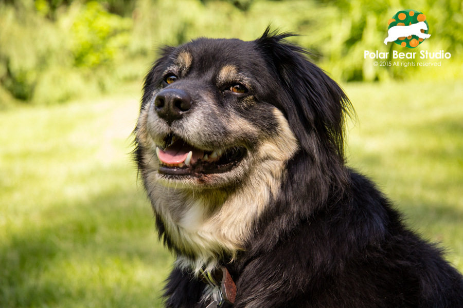 Pet photography, rescued, Australian shepherd mix, bokeh background | Photo by Polar Bear Studio, Copyright 2015