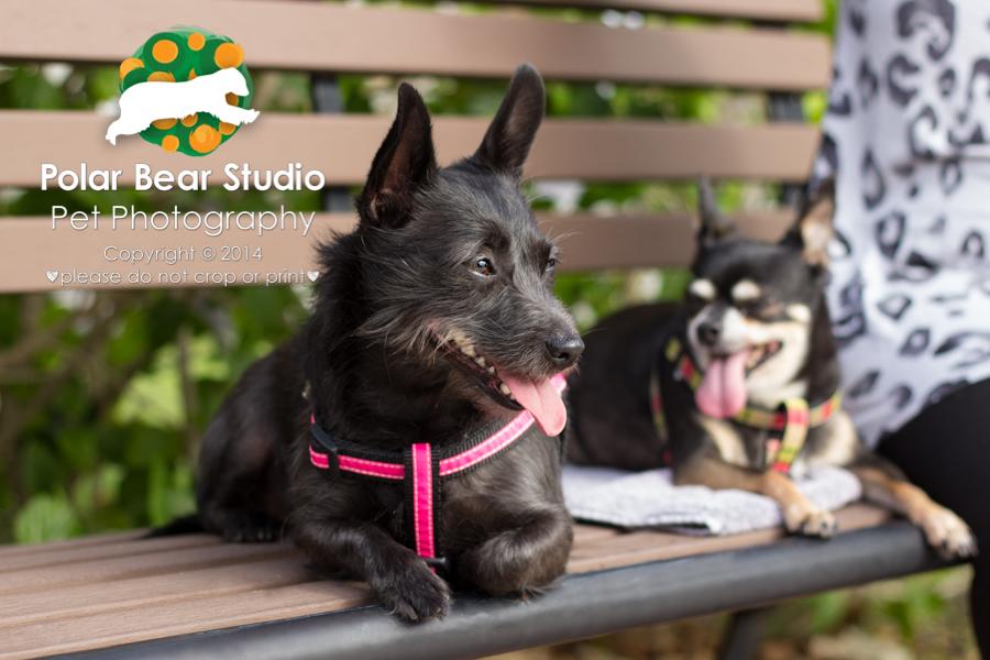Canine Best Friends, Photo by Polar Bear Studio
