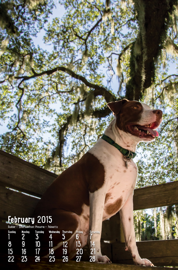 February for Dogs of Manatee County Calendar by Polar Bear Studio