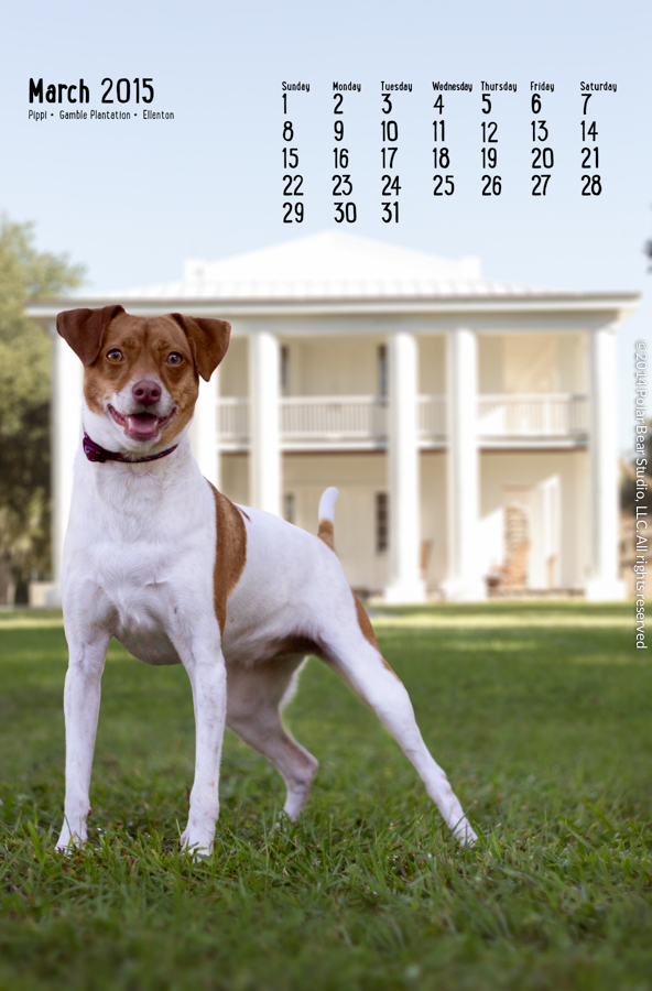 March in the Dogs of Manatee County Calendar by Polar Bear Studio