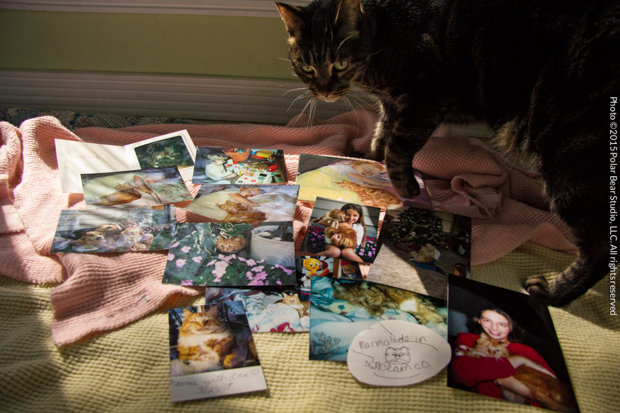 Katze Helping Me With My Family Photos
