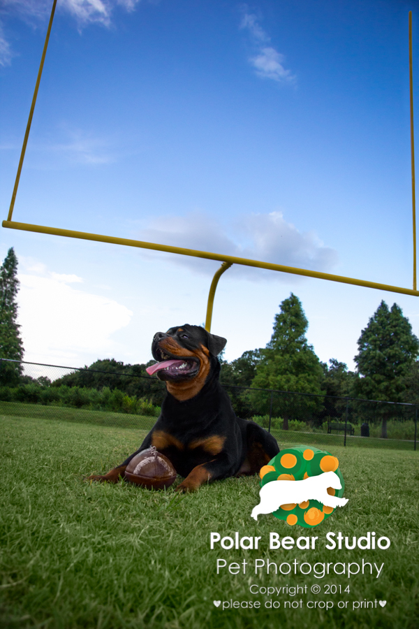 Rottweiler and his favorite football, by Polar Bear Studio