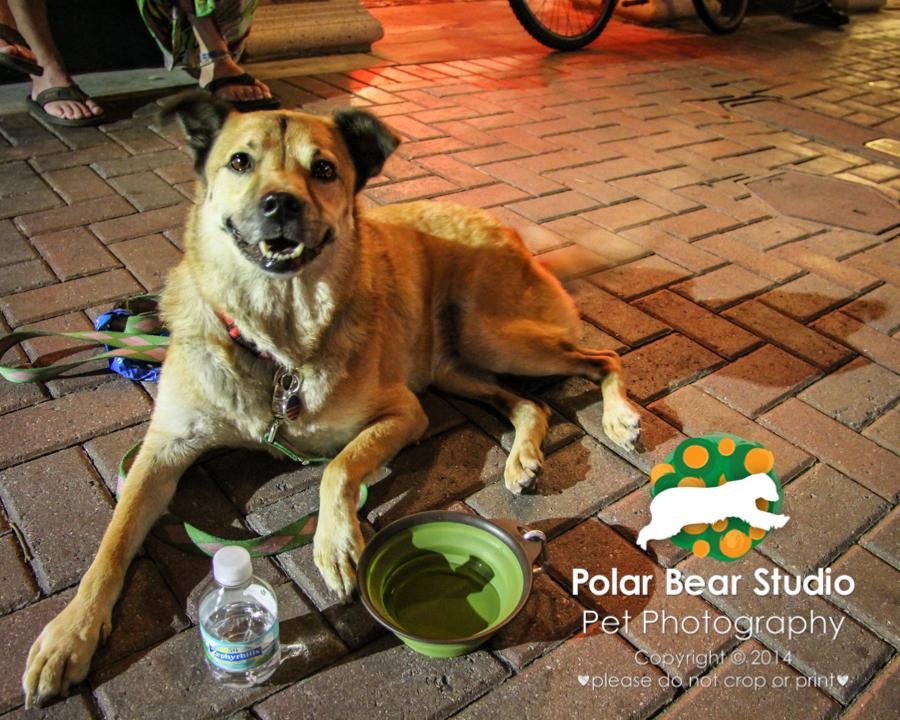 Downtown Bradenton is dog friendly, Photo by Polar Bear Studio